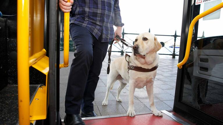Travelling with animals and pets   transportnsw info
