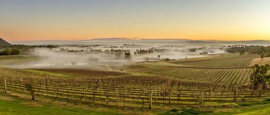 Hunter Valley vineyards at sunset with mist